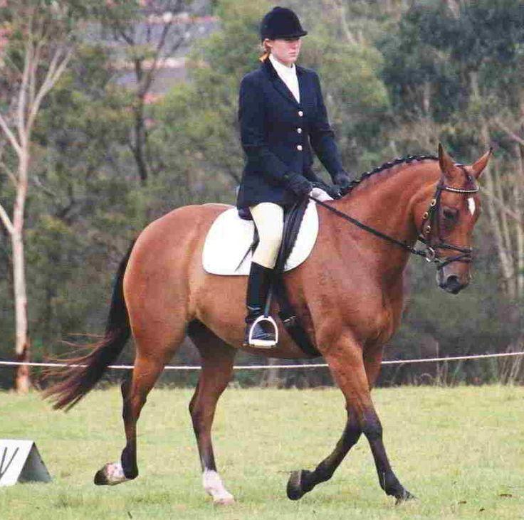 Waler horse. Chalani Illusion