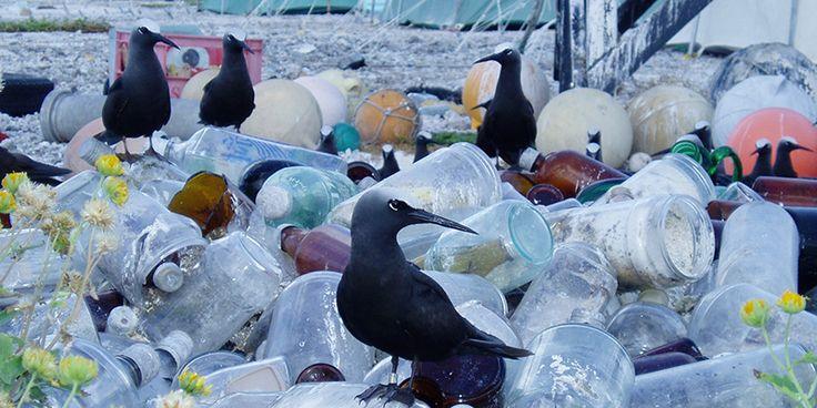 Etwa 70 Prozent der Oberfläche der Erde sind von Wasser bedeckt. Doch heute schwimmen in jedem Quadratkilometer der Meere zehntausende Teile Plastikmüll.