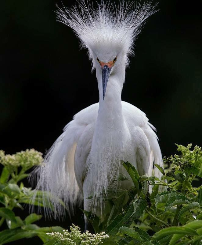 Egret or Heron chick