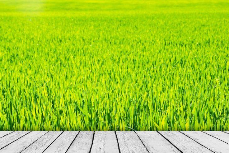 Zöld fű - PROAKTIVdirekt Életmód magazin és hírek - proaktivdirekt.com
