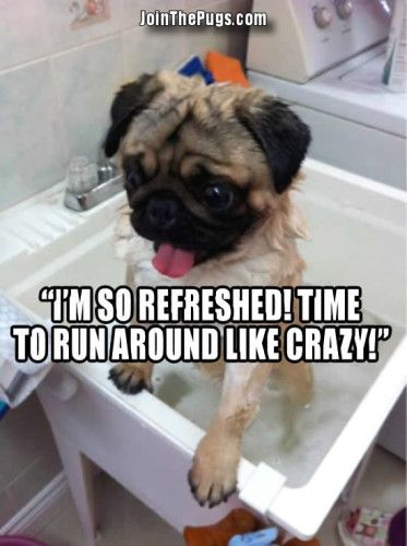 Our First Throwback Thursday - Join the Pugs