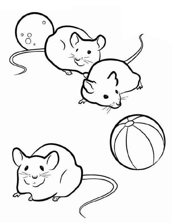 three mice in guinea pig coloring page  three mice in