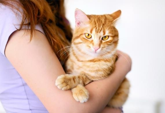 5 Ways to Help Your Cat Stay Disease and Illness Free | petMD