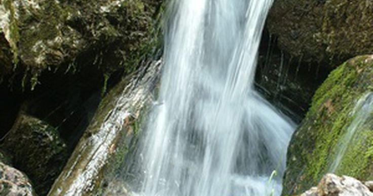 La importancia del agua para las plantas y los animales. El agua es el recurso más abundante de la Tierra. Por numerosas razones, es considerada responsable de la vida. Tanto las propiedades físicas de esta sustancia como su composición química proporcionan a los animales recursos esenciales, permiten que tenga lugar los procesos vitales y ayudan a los organismos a aclimatarse a las condiciones ...
