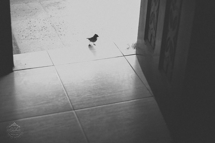 A bird in a wedding. First guest to arrive <3