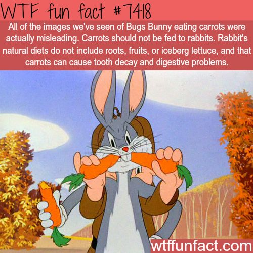 Don't feed carrots to rabbits - FACTS