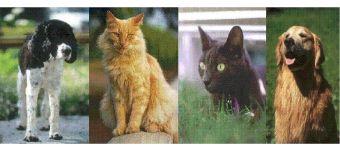 Holistic Pet Remedies: Cat Hair Loss, Dog Hotspots, Pets Allergies, Skin Allergy Problem