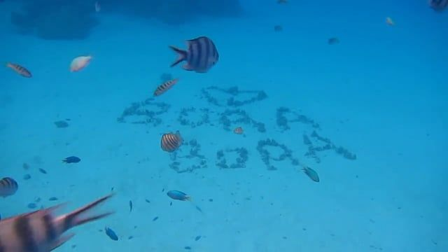 A highlight reel of our time in Bora Bora - Enjoy! www.thegirlswhowander.com
