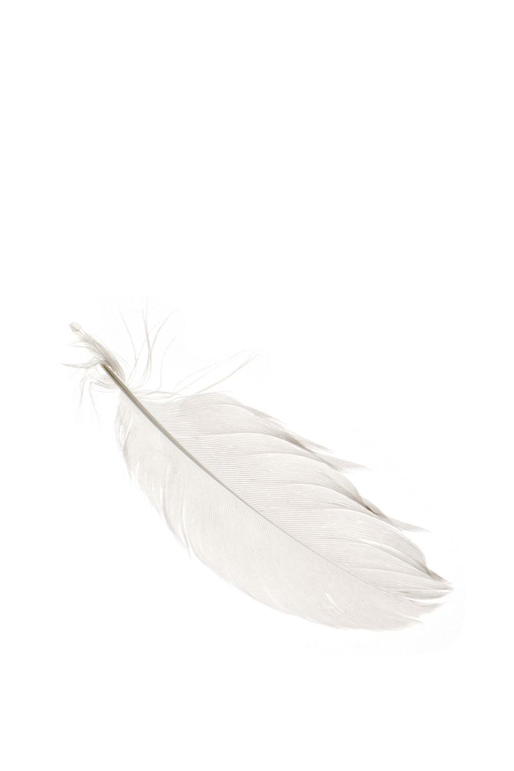 white-feather-mjh