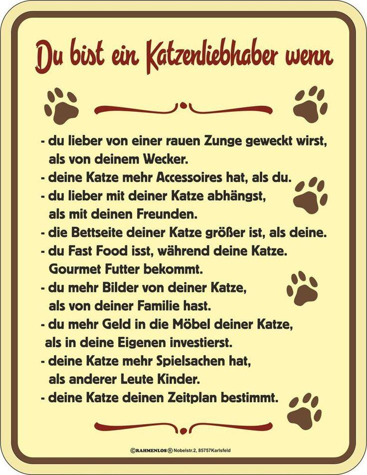 Katzen Sprüche - Katzenliebhaber - Spruch Blechschild mit 4 Saugnäpfen - Größe 17x22 cm: Amazon.de: Küche & Haushalt