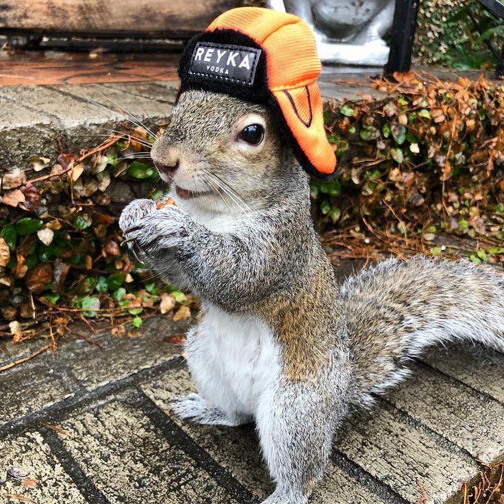 "Bella of cidandbella on Instagram: ""Cold and rainy South Carolina day calls for a warm trapper hat! Thanks @reyka_vodka...."""