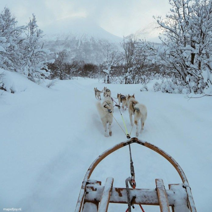 Husky dog sledding, winter, Tromso, Norway, snow - Map of Joy