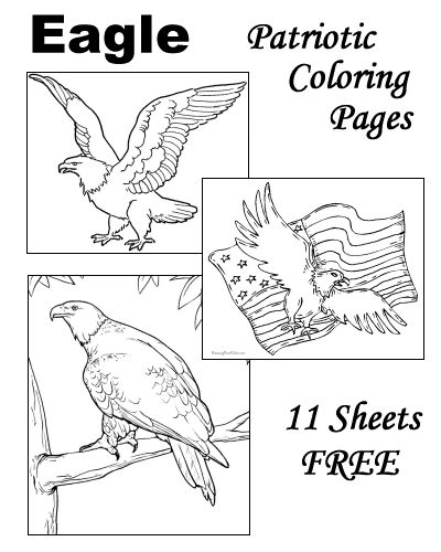 the 221 best images about coloring pages... plus on pinterest ... - American Bald Eagle Coloring Page