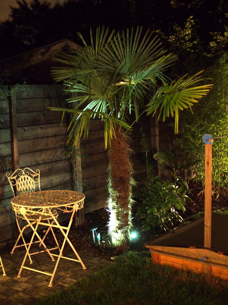 best 25 hanfpalme ideas on pinterest palmen garten yucca palme winterhart and hanfpalme pflege. Black Bedroom Furniture Sets. Home Design Ideas