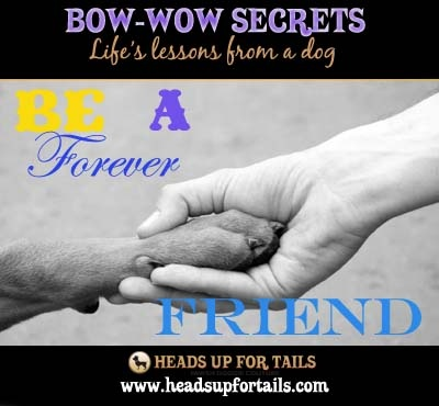 Be a forever friend!