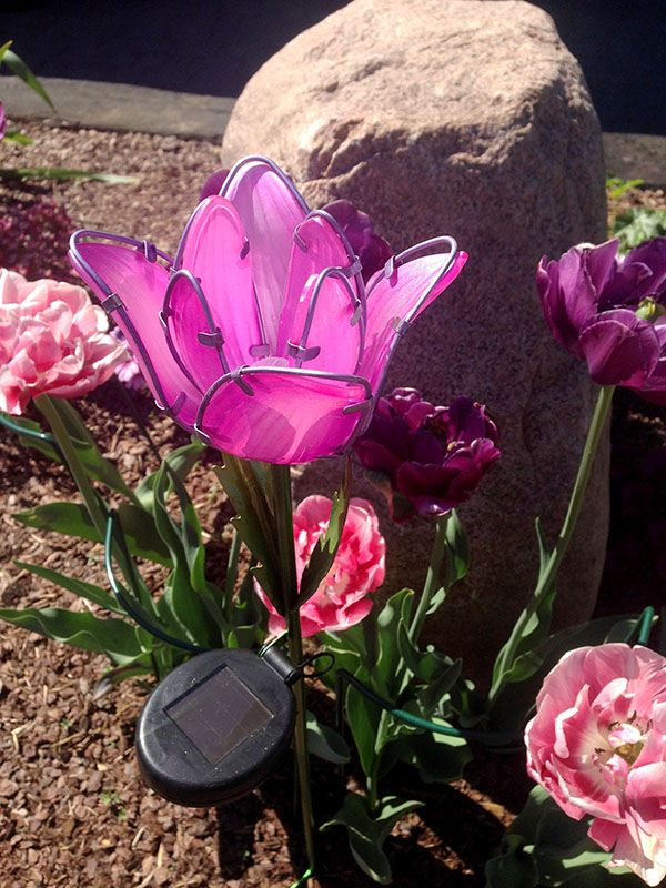 Moze I Tulipany Kwitna Krotko Ale Jesli Uwielbiasz Je Tak Jak Ja To Nic Nie Stoi Na Przeszkodzie Zeby Cieszyc Sie Nimi Caly Rok Solarne Kwiaty Plants Garden