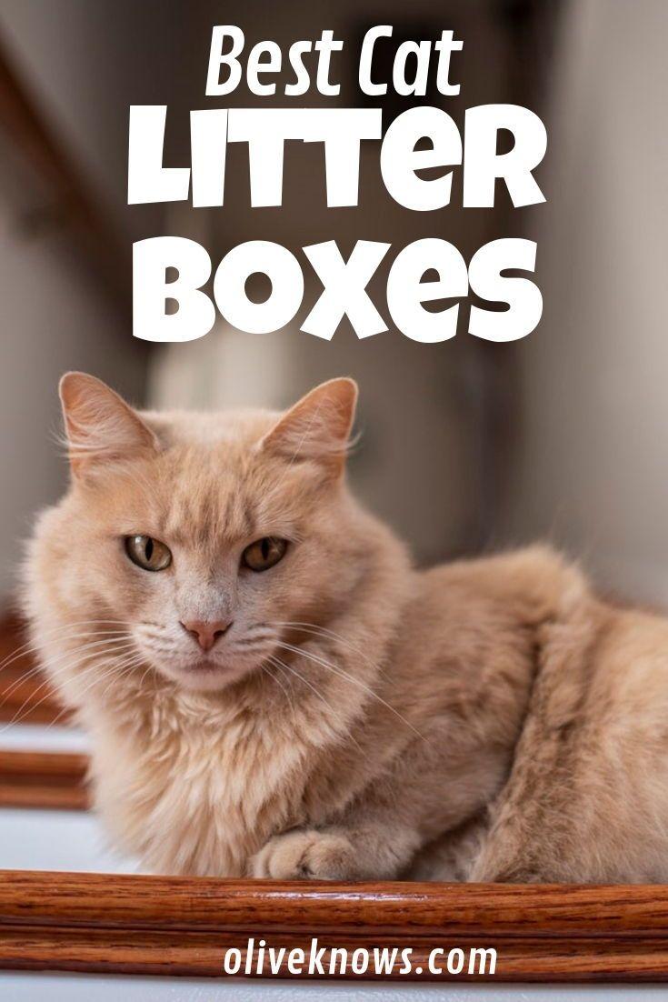 Best Cat Litter Boxes Best Cat Litter Cats Cool Cats
