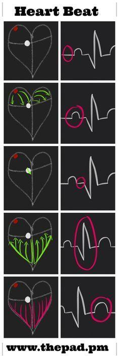 How the Heart Beats :)