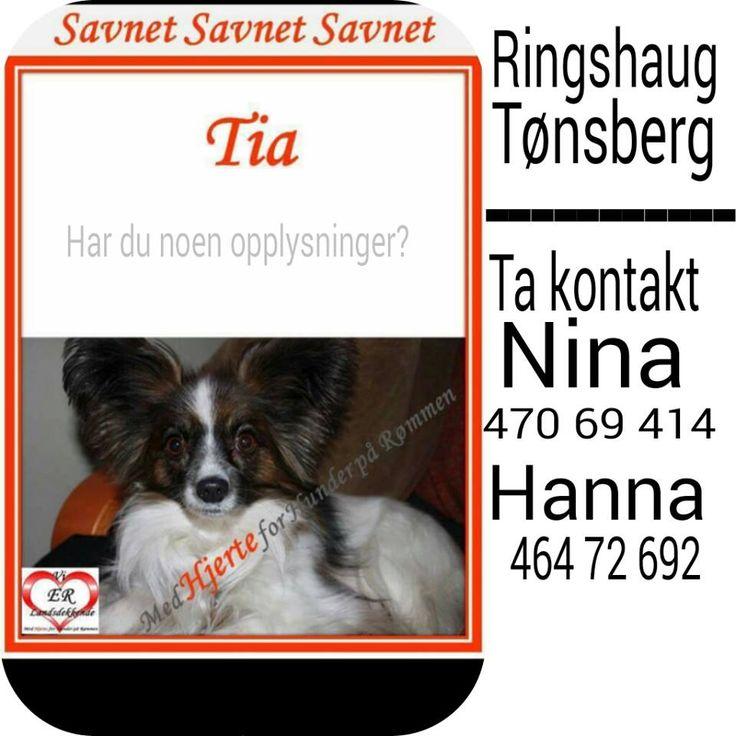 SAVNET : Ringshaug/Skallevoll Parkering. Tønsberg /Vestfold (01.02.2015) Forsvinningsadressen er gjennomsøkt og videre søk på denne adr gjøres av eier. . .  NAVN : Tia . .  RASE : Papillon . . FARGE : Svart/Hvit og litt brun . .  KJØNN : Tispe . .  ALDER : 5 år. . VEKT : . . CHIP : Ja . . BÅND : Har telefonnummer på halsbånd, rødt halsbånd. .  POLITI/FALCK/VIKING : Ja  HJERTEkontakt:: Hanna 464 72 692 // Nina 470 69 414