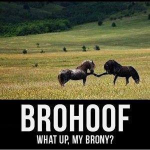 Image result for horse shaming