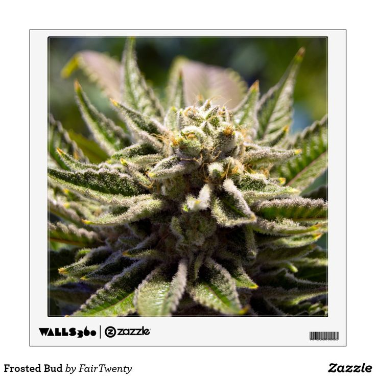 Frosted Bud Removable Wall Decal #marijuana #ganja #pot #weed #cannabis #grass