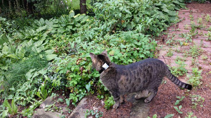 DIY GPS Cat Collar