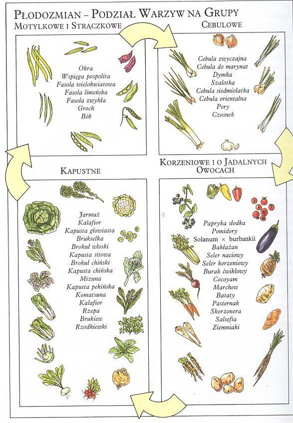 następstwo warzyw płodozmian