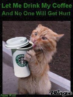 me in the morningCaffeine, Funny Cat, Coffee, Funny Stuff, Humor, Kitty, Mornings, Starbucks, Animal