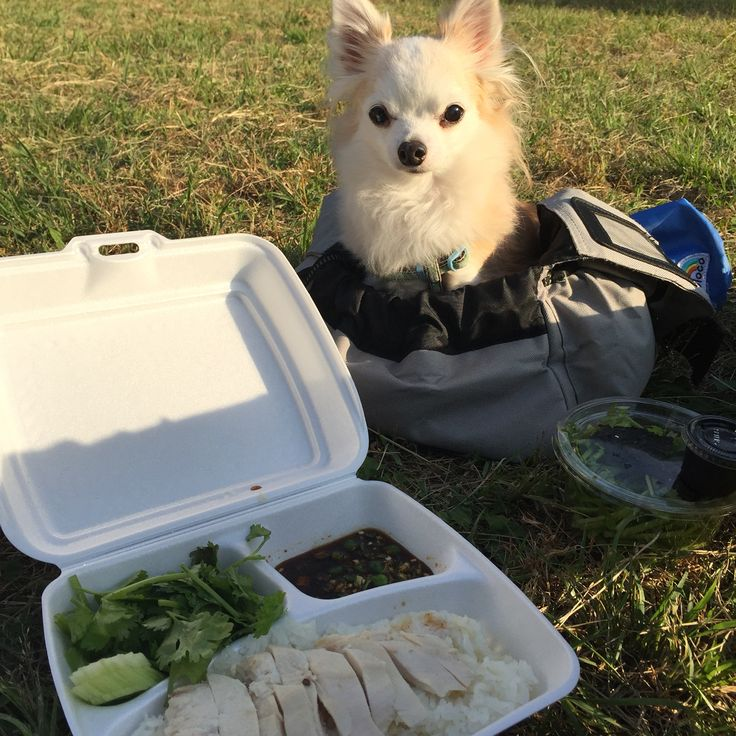 picnic lunch with my lovely dog