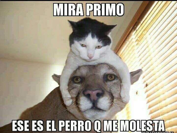 Imagenes de Humor #memes #chistes #chistesmalos #imagenesgraciosas #humor www.megamemeces.c... ➟➟ http://www.diverint.com/humor-grafico-espana-caras-graciosas-bebes