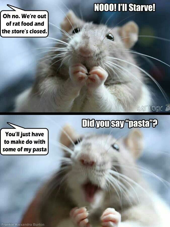 something every rattie parent has been through at least once. Lol