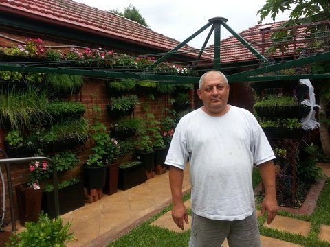 """In his retirement Peter Pannys has turbo charged his small back yard into a high yield organic sustainable vegetable farm.  By """"word of mouth"""" Peter has foodies visiting daily from locally and interstate, where he has pleasure in explaining how they too can eat out of a small area, using Wallgarden to grow vertically."""