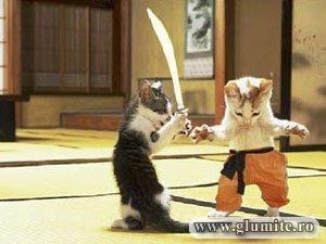 Poze Animale-Samurai cats Bancuri glume poze - Glumite.ro