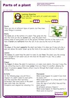 Outstanding Science Year 2 - Plants   Parts of a plant