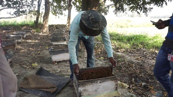 #VR #VRGames #Drone #Gaming beekeeping in india full process and differences in queen bee and drone bee Awesome, Bee, beekeeping, beekeeping equipment, beekeeping for beginners, beekeeping in hindi, beekeeping in india, beekeeping process, beekeeping production process, beekeeping video, bees, drone, drone bee, Drone Videos, hive, Honey, honey bee, honey bee procedure, honey bee process, honeybee, india, process, queen, queen bee, shook swarm, swarm #Awesome #Bee #Beekeepin