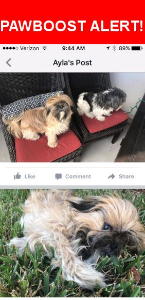 Please spread the word! Lucy was last seen in Jacksonville, FL 32259.    Nearest Address: Near Cimarrone Blvd & Indian Creek Blvd