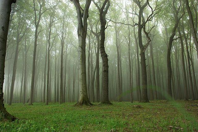 Gespensterwald Germany   Gespensterwald (Ghost Forest), Neinhagen, Germany