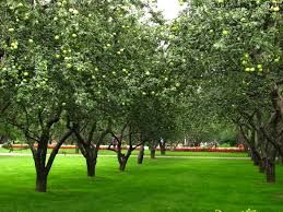 Image result for fruit orchard images