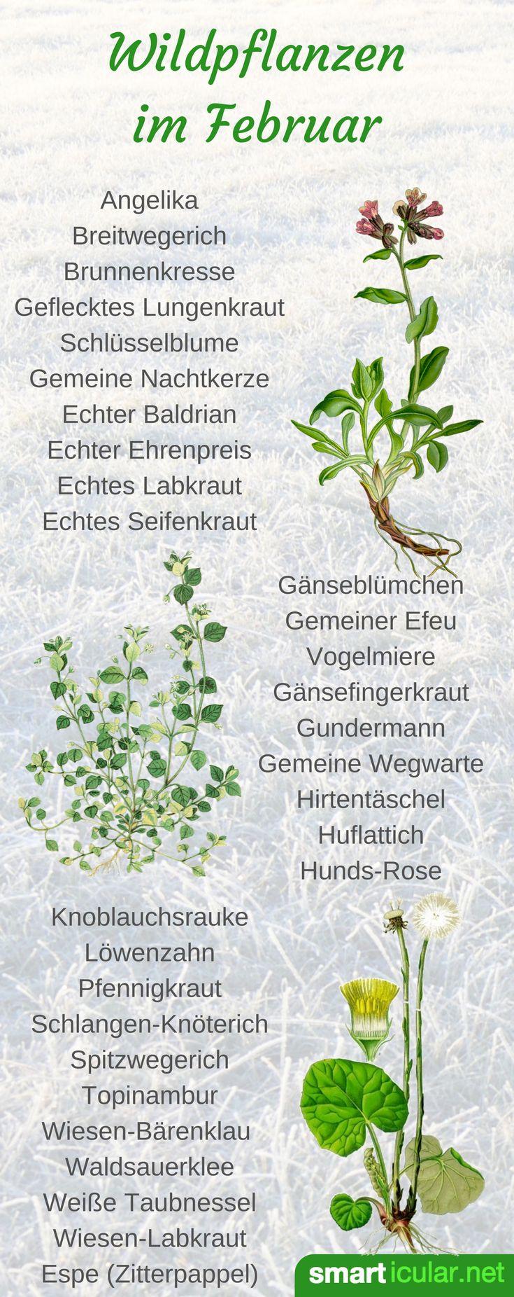 Schmackhaftes aus Feld und Flur: Wildpflanzen im Februar