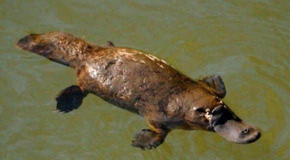 Animais Encontrados Somente na Austrália | Natureza - TudoPorEmail