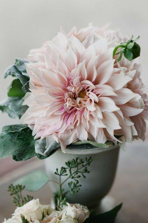 ... De Chrysanthème sur Pinterest  Bouquets, Bouquet De Tulipes et