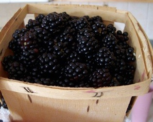 Growing Blackberries. Good info!