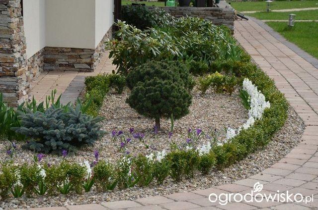 Jak zamienić glinę w wymarzony skrawek Ziemi. - strona 299 - Forum ogrodnicze - Ogrodowisko