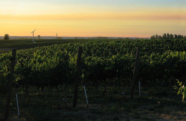 A #Wine Weekend in Walla Walla, Washington
