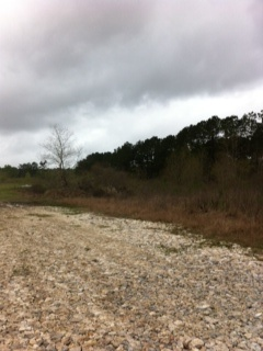 8077 FM 1130, Orange, TX 5.38; Another parcel of land that runs parrell with this land 5.13 Acres is also available, Little Cypress-Skinner Addn.  Call Taura Hogan 409-988-9188, t.dediego@yahoo.com for any information.