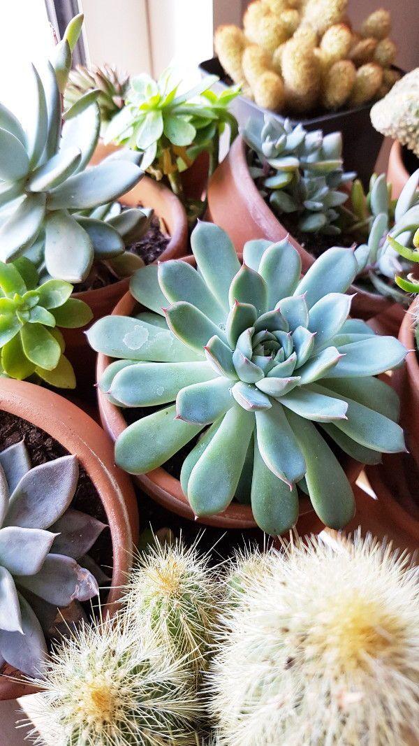 Comment Conserver Dans De Bonnes Conditions Les Cactus