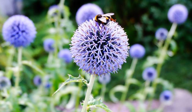 Super 6 x planten die goed tegen droogte kunnen: planten en droogte HN-34