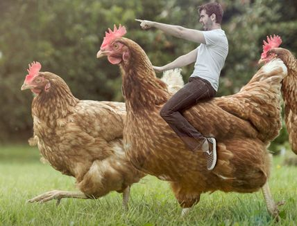 How a guy riding a chicken became an overnight street art sensation