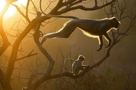 Monkey Jumping by Steve Bloom.