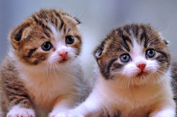 gituaja.com - nih alasan kalo mau melihara kucing (1)
